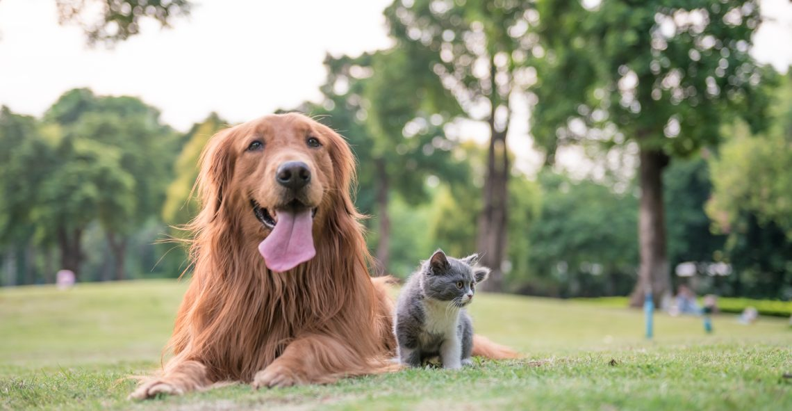 Horsham's Best Pet Friendly Accommodation - Horsham Riverside